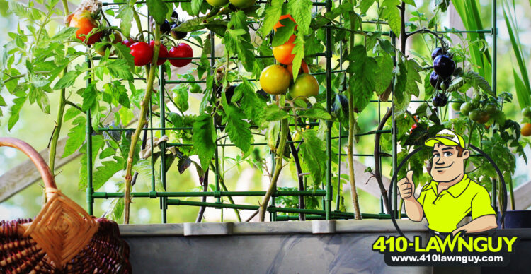 When is the Best Time to Plant Fruits and Vegetables?