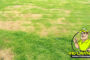 How to Fix Dead Grass Patches in Your Lawn