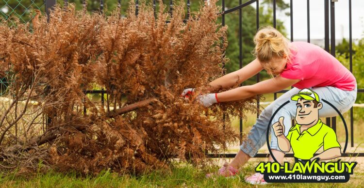 Dead Trees in Your Yard?