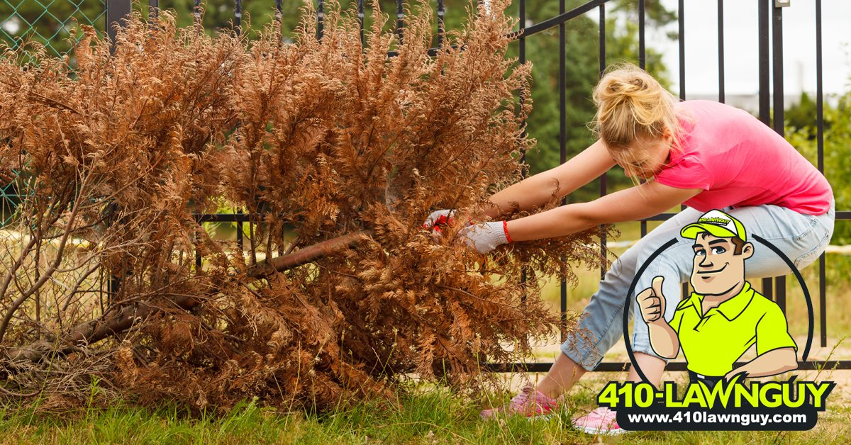 Dead Trees in Your Yard
