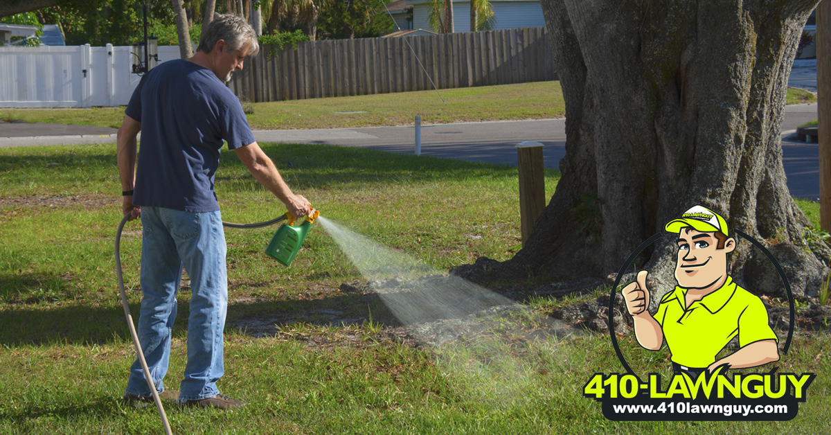 Don't Let Weeds Take Over Your Lawn_