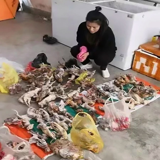When the Sars crisis was linked to a wet market in southern China, officials shut it down and made wildlife farming illegal. credit: AsiaWire