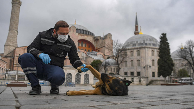 Turkey to ensure beloved street cats don't go hungry during coronavirus crisis
