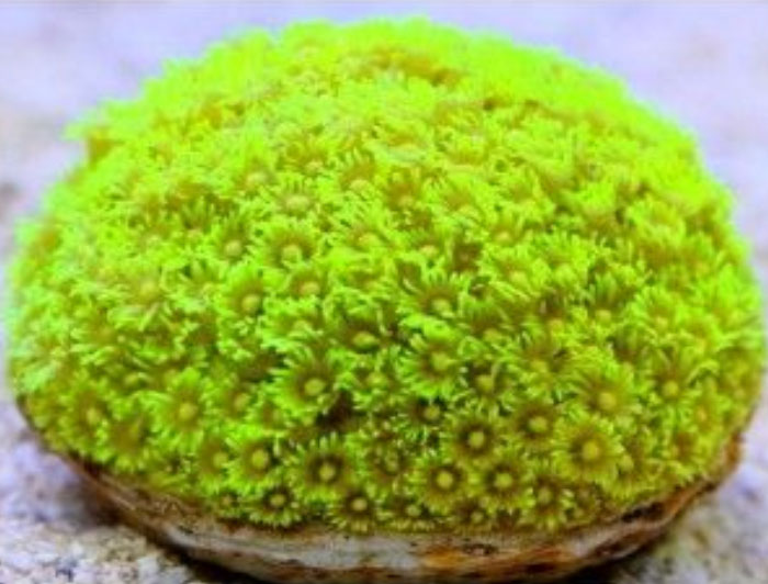 Bright Green (Flower Pot)