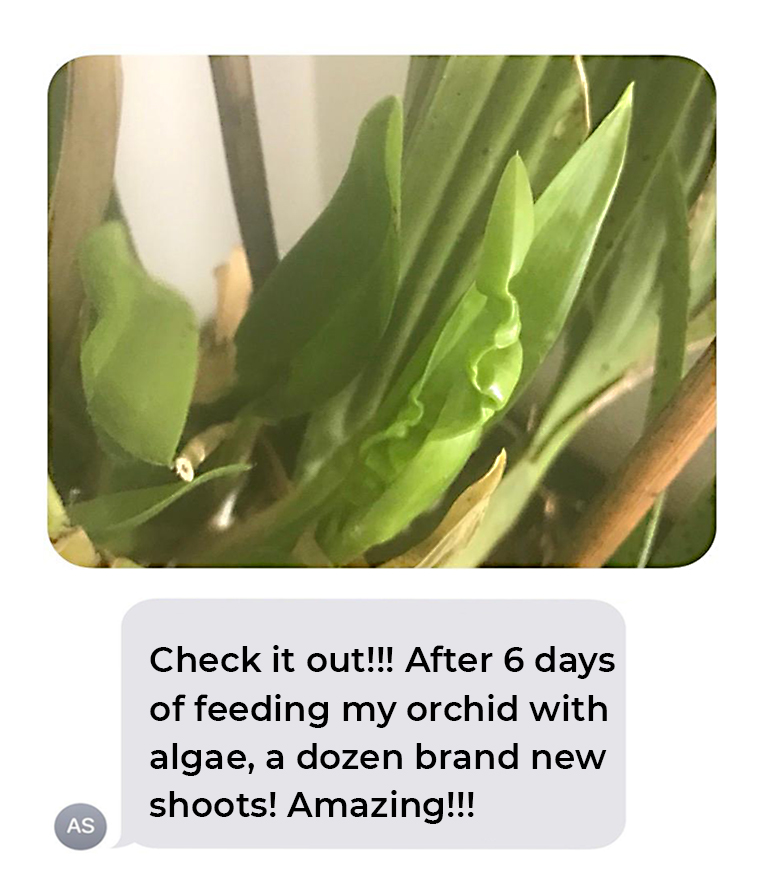 Orchid shoots image and text message stating that this orchid plant grew a dozen shoots within 6 days of being fed WOWGROW!