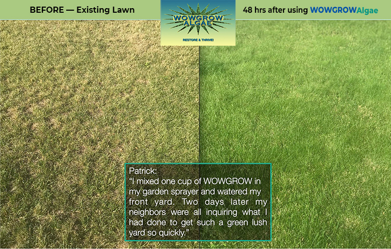 Side-by-side comparison of a lawn before and two days after one WOWGROWAlgae application.
