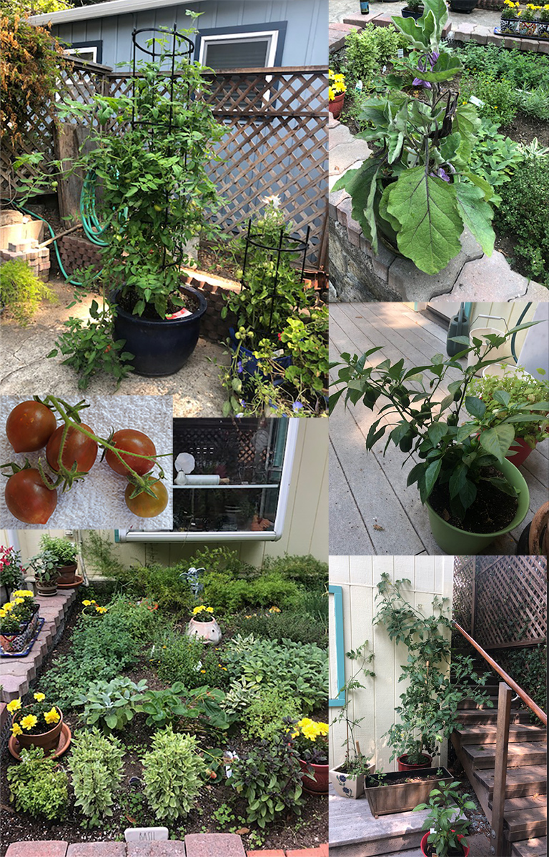 4 photos in a collage showing flowers and vegetables in a home garden. A fifth inset photo shows a close up of a chocolate tomato.