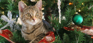 Laguna Beach Veterinary Medical Center - Fur-Friendly Tips - Holiday Safety for Pets