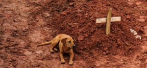 Laguna Beach Veterinary Medical Center - Fur-Friendly Tips - Amazing Animals: Leao The Dog
