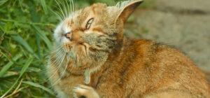 Laguna Beach Veterinary Medical Center - Fur-Friendly Tips - Dealing With Pet Allergies