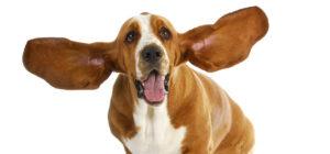 Laguna Beach Veterinary Medical Center - Fur-Friendly Tips - Solving Pet Ear Issues