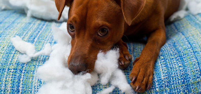 Laguna Beach Veterinary Medical Center - Fur-Friendly Tips - HELP! We Have Pet Separation Anxiety!