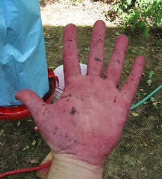 Hand o Purple_1_small