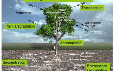 Environmental Cleanup and Hemp