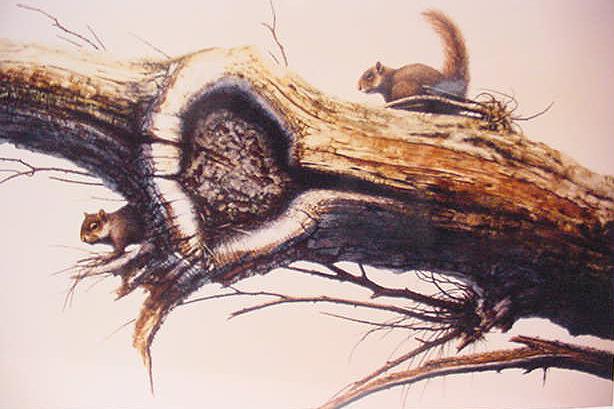 Squirrels 3 – Jack Coneby