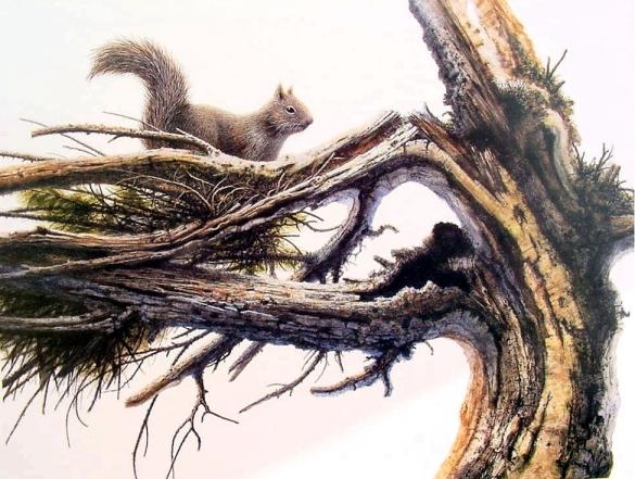 Squirrel 2 – Jack Coneby