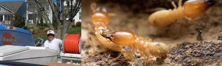 Rock Hill Termite Control