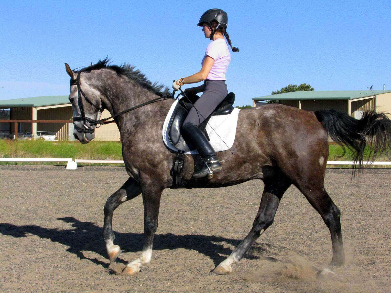 Keene Dressage and horse lessons in Santa Fe, NM