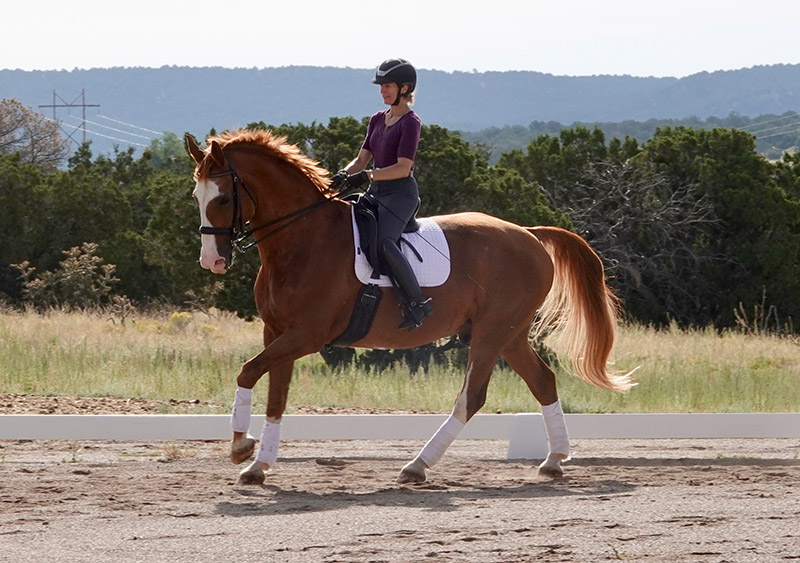 horse riding lessons philosophy
