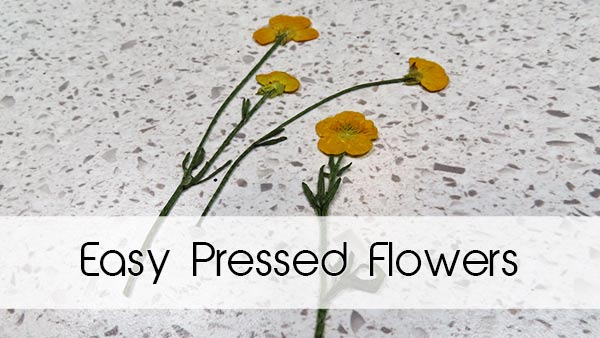 Easy Pressed Flowers How-To