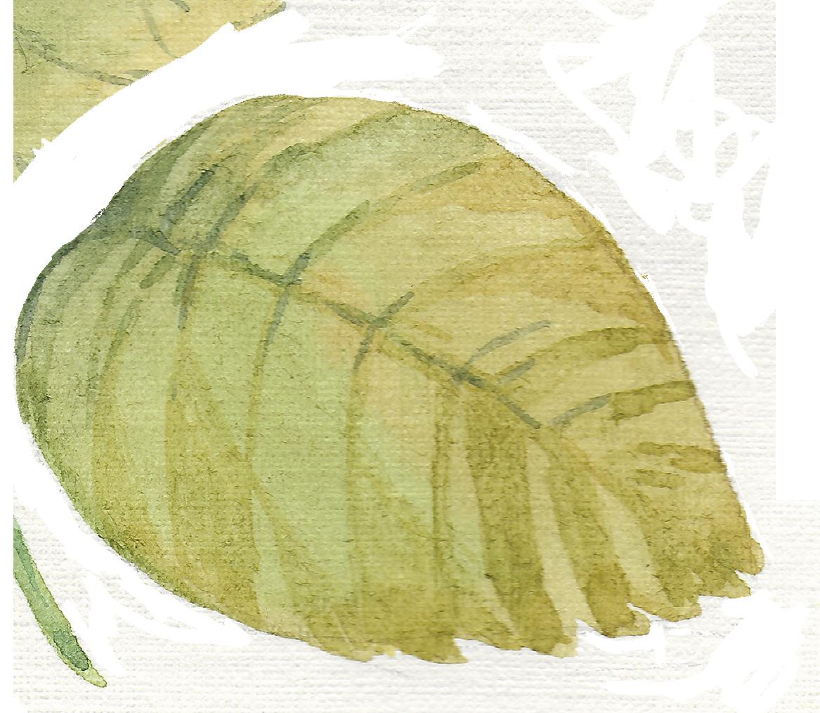 leaf 1_2