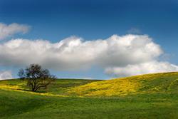 dn_img_tree_and_sky