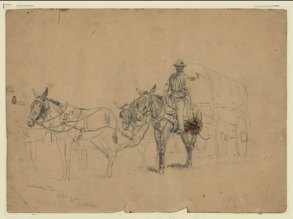 Forbers- Drawing of a Mule Team and Driver