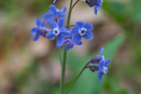 241_Spring_Flowers-3
