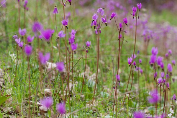 243_Spring_Flowers-5