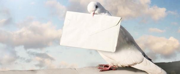 carrier pigeon delivering an envelope