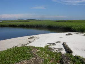 Nature Coast photo presentation (45)