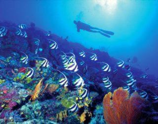 diving_bucket_list
