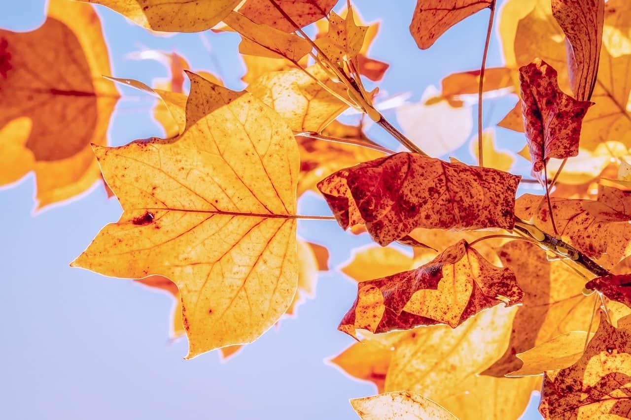 autumn, fall leaves, leaves-3763897.jpg