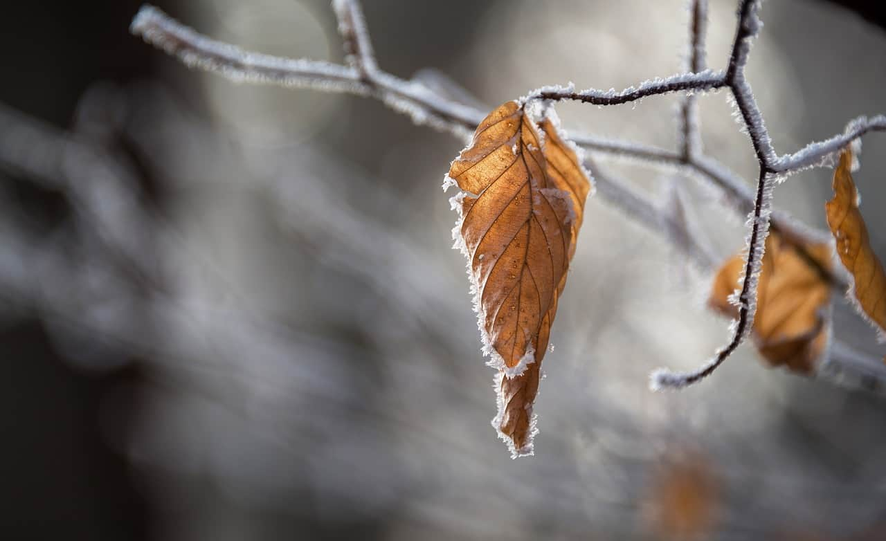 snow, autumn, leaves-2582719.jpg