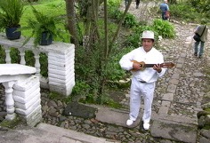 plant-musician