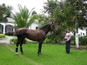 restaurant horse2