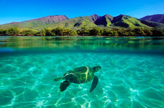 Holy Moly Maui!!!
