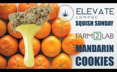 SQUISH SUNDAY - FARM 2 LAB - MANDARIN COOKIES