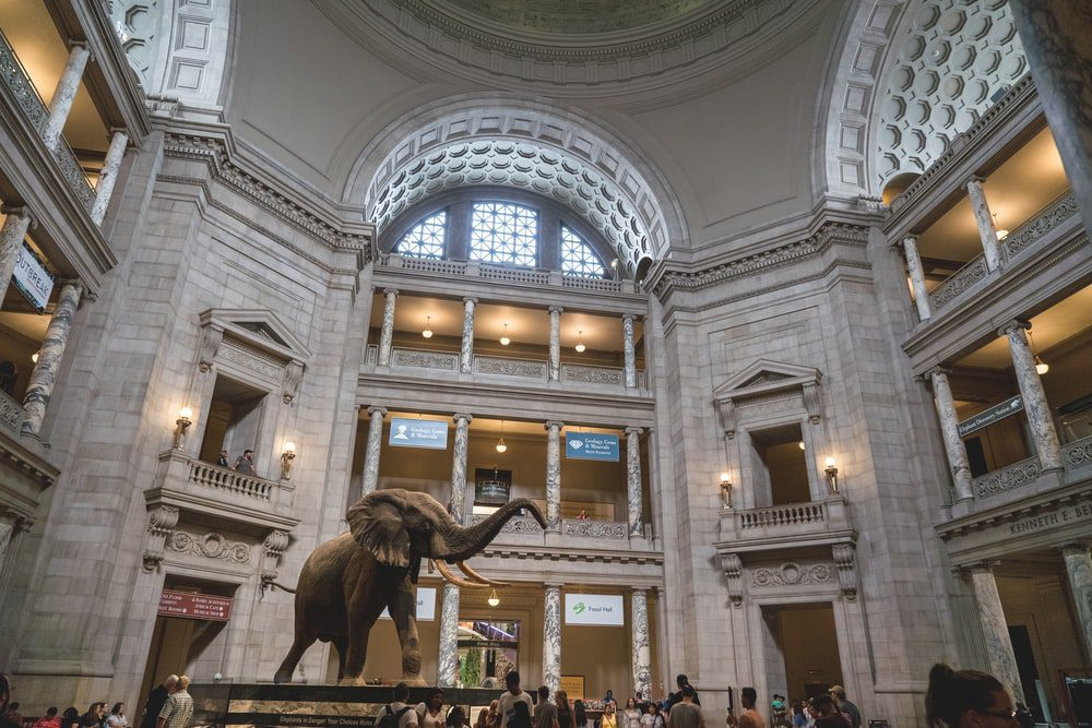 inside of a museum lobby with tourists surrounding elephant statue