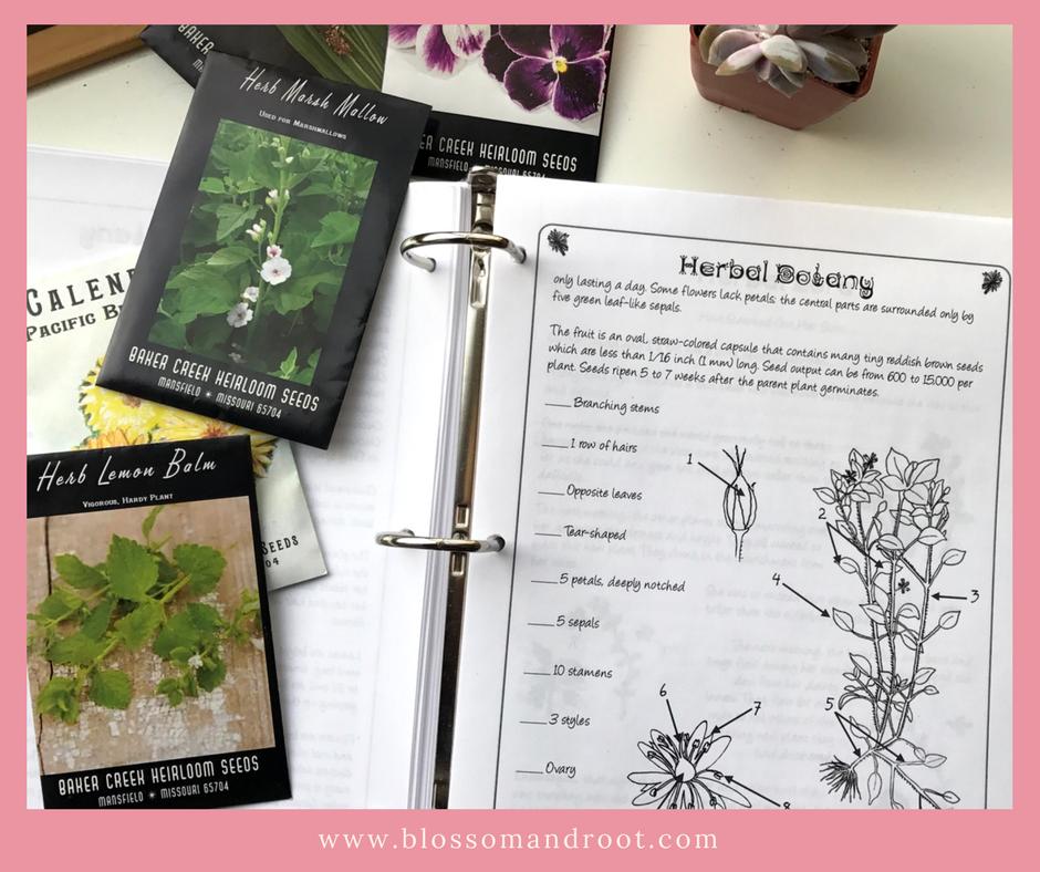 herb fairies book club