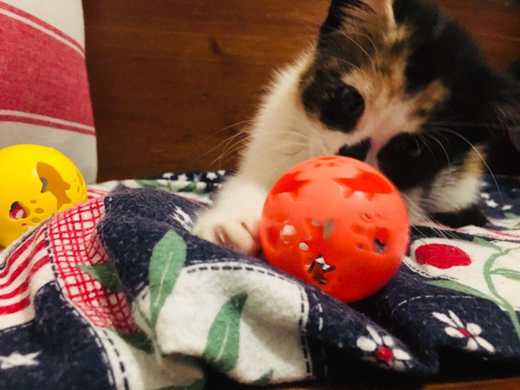 'Pumpkin' Smith loves her toys! (N.C.)