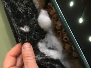 Aquarium filter. Wool for filtering smaller solids.
