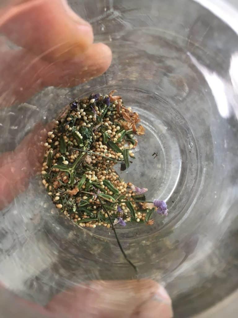 Propagate Alpine violet-seeds
