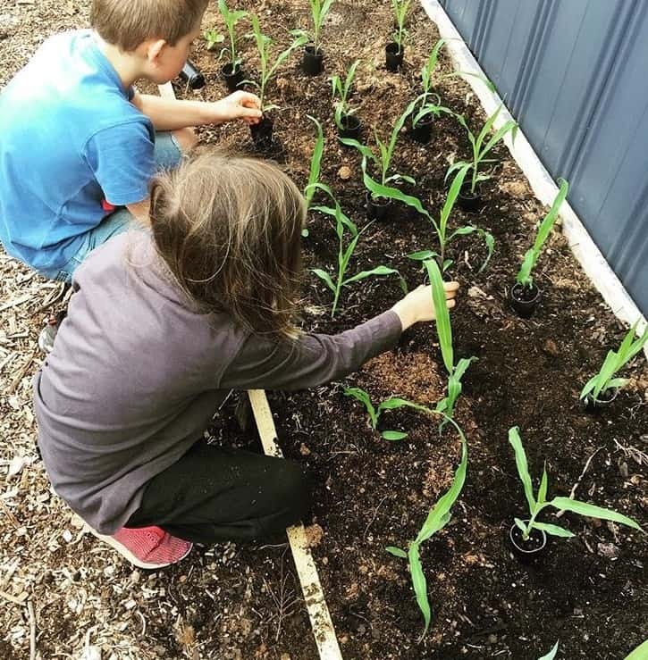 Kids planting the corn