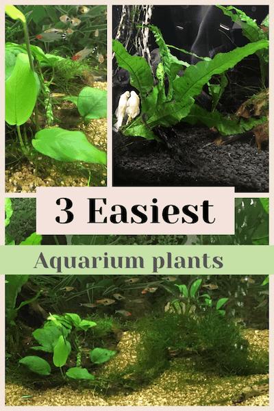 3 Easiest aquarium plants you can grow