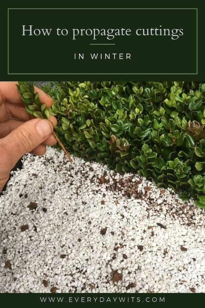 How to propagate plant cuttings in winter