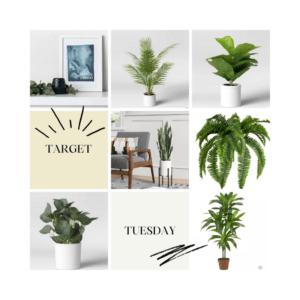 sarah bowmar fake plants target tuesday