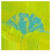 blue ginkgo leaf