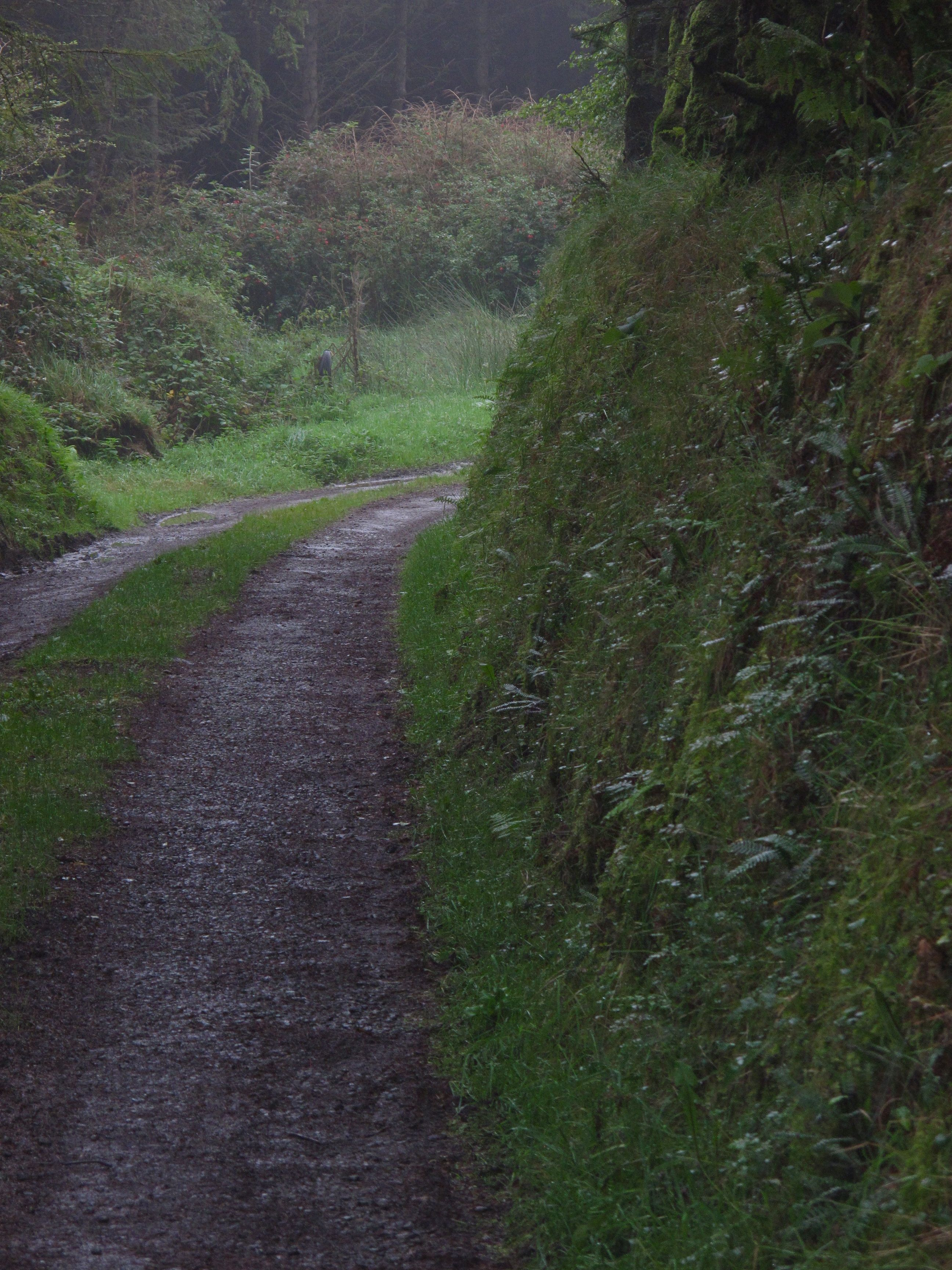 Road in front of my grandmother's house in Ireland