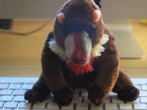 Picture of Mandrill